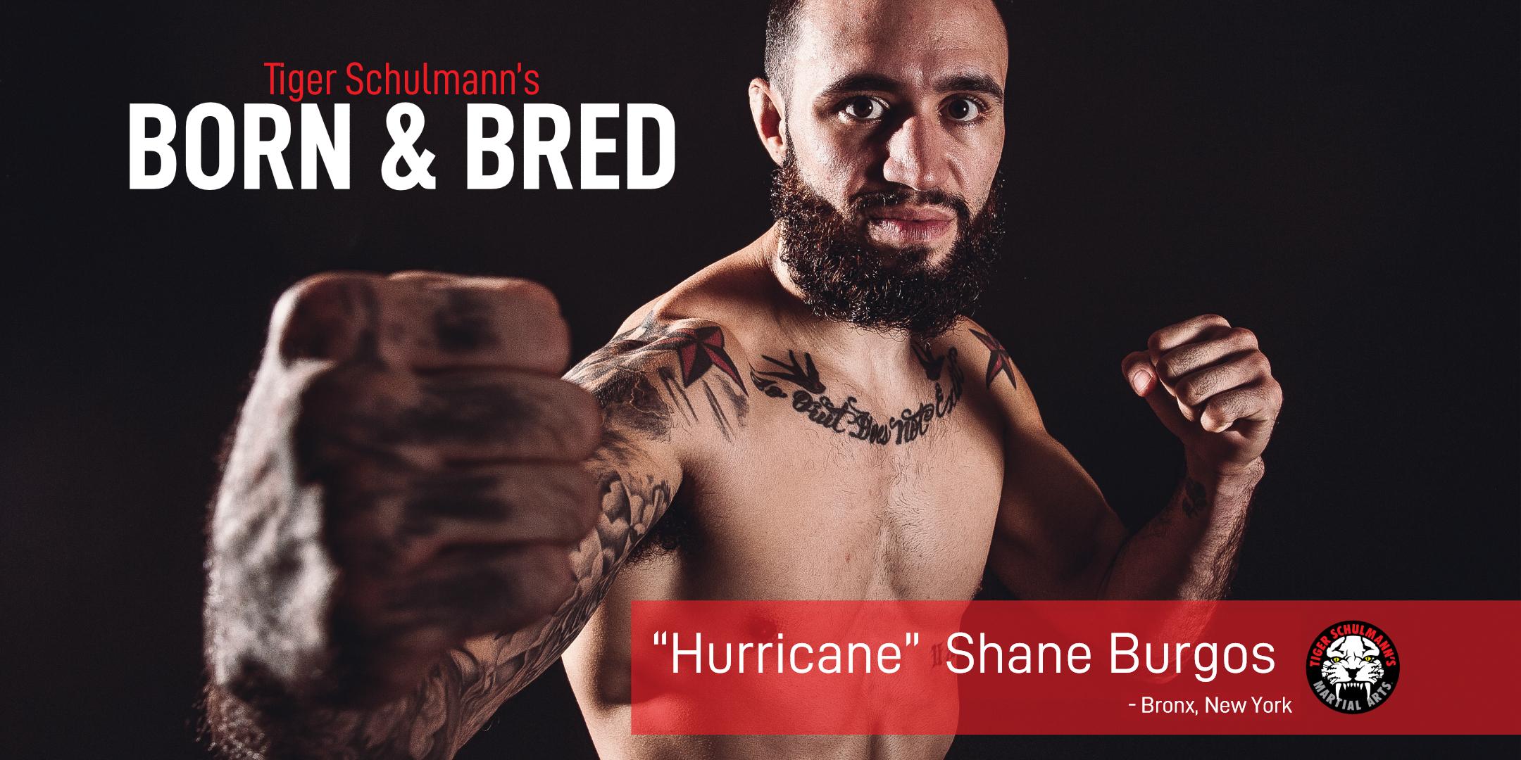Tiger Schulmann's Martial Arts | Shane Burgos